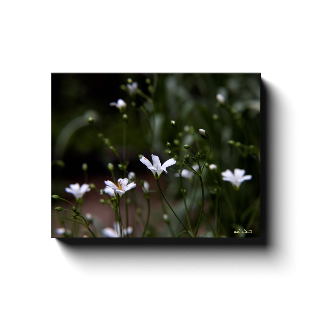 A macro photograph of white wildflowers, taken by the photographer a.d. elliott - Take the Back Roads - #TaketheBackRoads  Printed on high quality, artist-grade stock and folded around a lightweight frame to give them a gorgeous, gallery-ready appearance. With acid-free ink that will last without fading or chipping, Features a scratch-resistant UV coating. Wipes clean easily with a damp cloth or to remove dust, vacuum gently using a soft brush attachment.