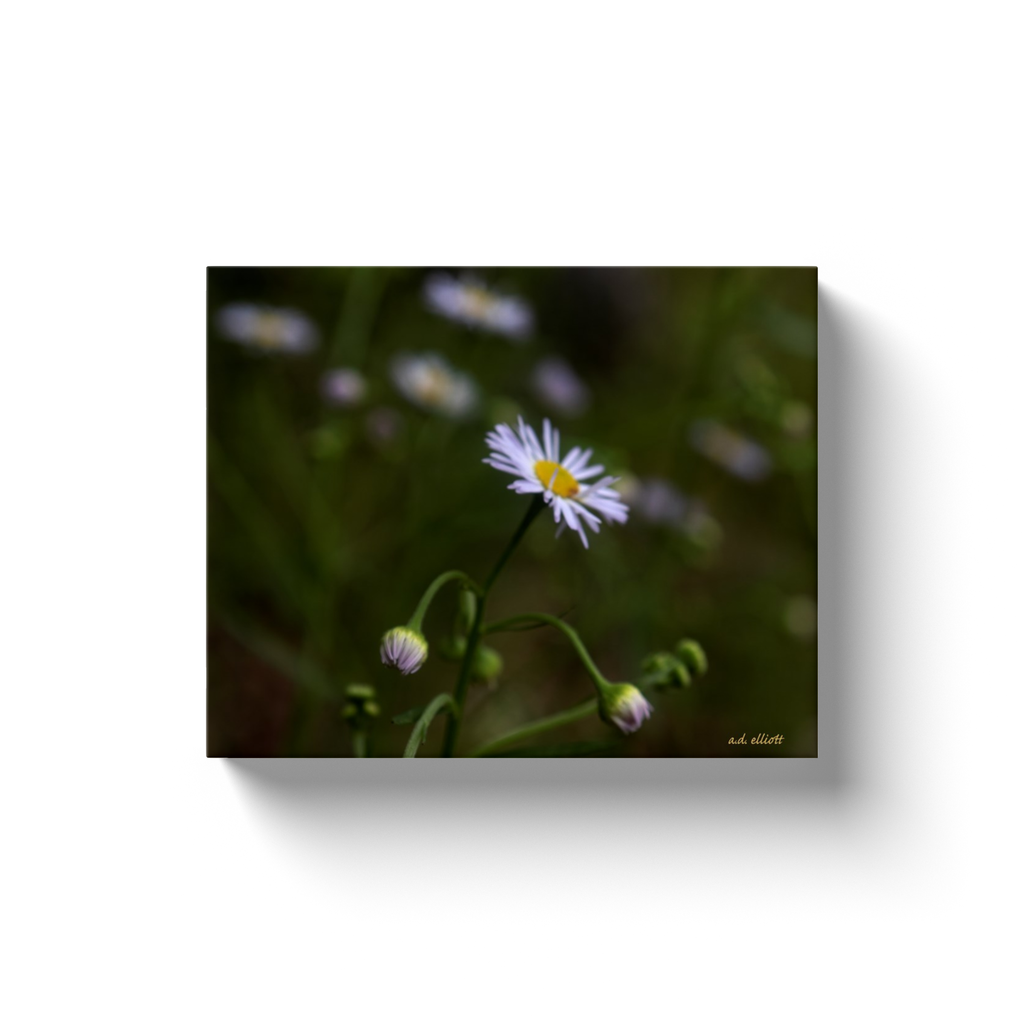A macro photograph of an Arkansas Lazy Daisy (Aphanostephus) taken by the photographer a.d. elliott  Printed on high-quality, artist-grade stock and folded around a lightweight frame to give them a gorgeous, gallery-ready appearance. With acid-free ink that will last without fading or chipping, Features a scratch-resistant UV coating. Wipes clean easily with a damp cloth or to remove dust, vacuum gently using a soft brush attachment.