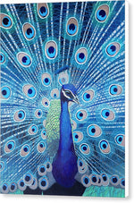 Blue Peacock - Canvas Print