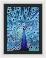 Blue Peacock - Framed Print