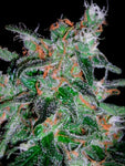 60 Day Lemon Auto Feminised Seeds - Aceitronics