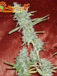 Krippleberry Auto Feminised Seeds - Aceitronics