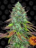 LSD Auto Feminised Seeds - Aceitronics