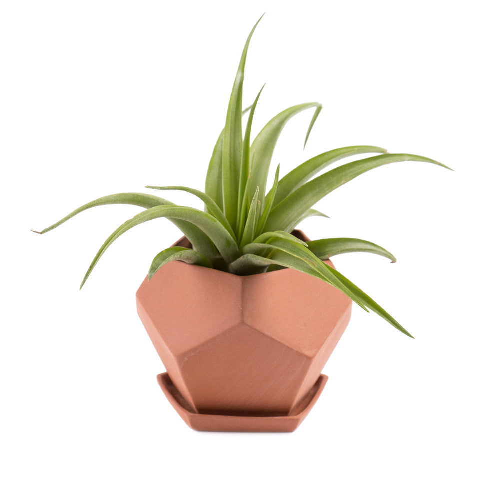 Small Geo Planter terracotta with tillandsia