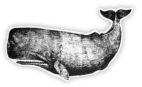 Ahoy - Cut Out Whale