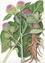 Load image into Gallery viewer, Burdock Root