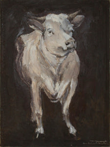 Cow Study Front-Facing View