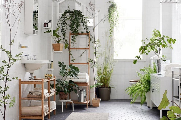 Are Houseplants the Secret to Preventing Dry Skin?