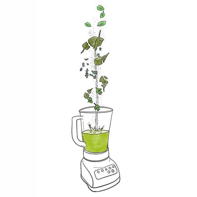 Illustration of herbs and spinach falling into blender for green smoothie