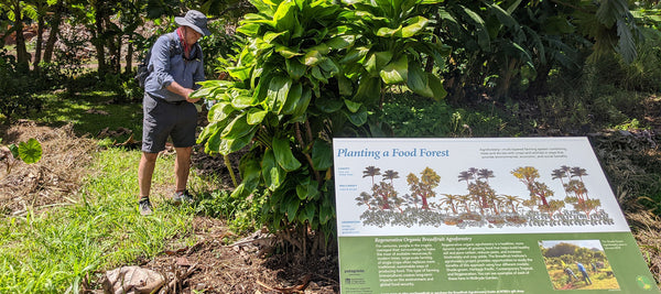 Man in brimmed hat looks at plants behind educational sign in garden in Kaua'i