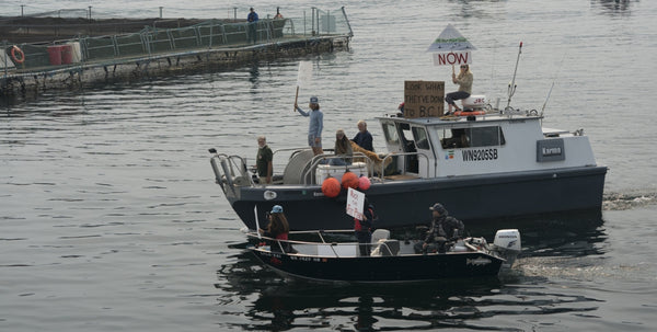 Small fishing vessels in Puget Sound are filled with people and signs protesting net-pen salmon farming practices