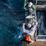 Shot looking down at two net pen fisherment pulling in nets of salmon for Patagonia Provisions Wild Pink Salmon