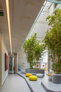 How Biophilic design can help improve mental health within the workplace?