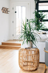 How to Turn your Home into a Plant Loving One?