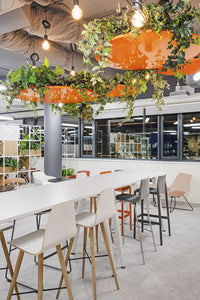 Biophilic Design: The answer to Why we need Nature in our Workplace?