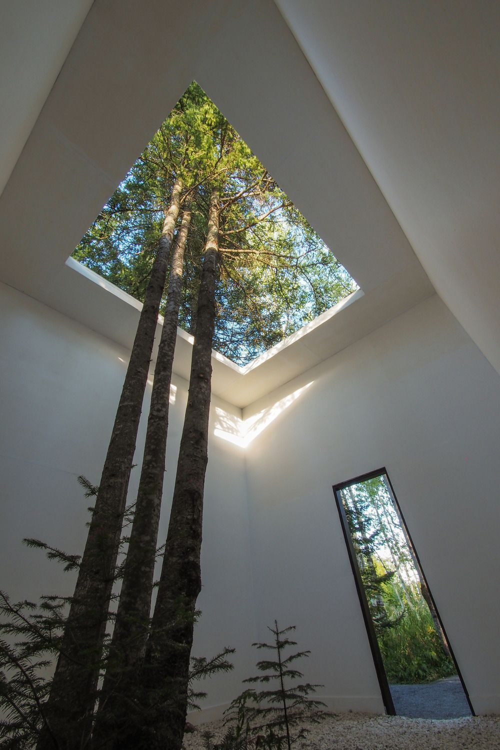 Tree's in house- Benefits of Biophilia, Image Credit - Pinterest