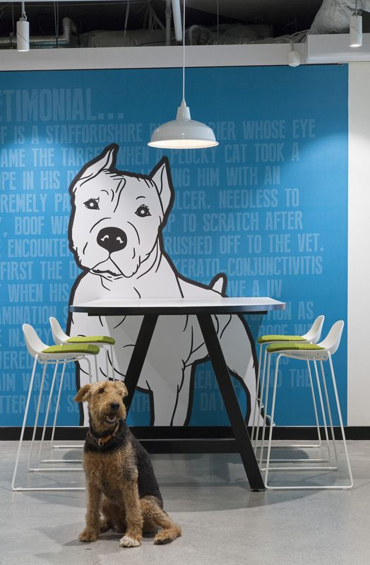 PetSure Offices – Sydney, Designed by The Bold Collective, Image Credit - Andrew Worssam