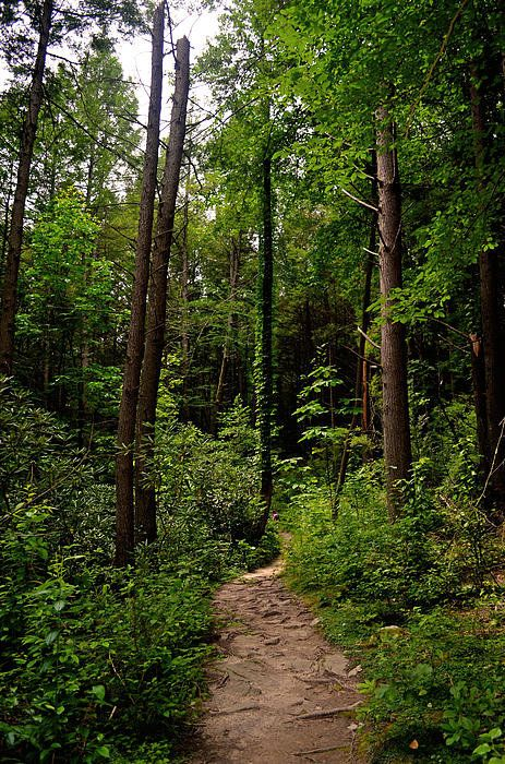 A Walk in the Forest, Image Credit - Fine Art America