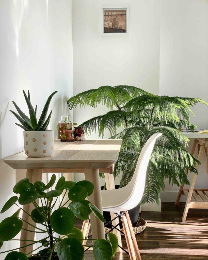 Plant Office Interior, Image Credit MyTastefulSpace