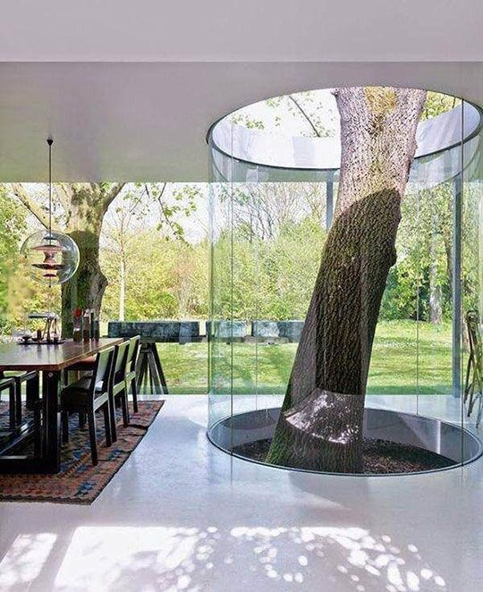 Tree Growing Inside The House Surrounded By A Glass Cylinder , Image Credit - Pinterest