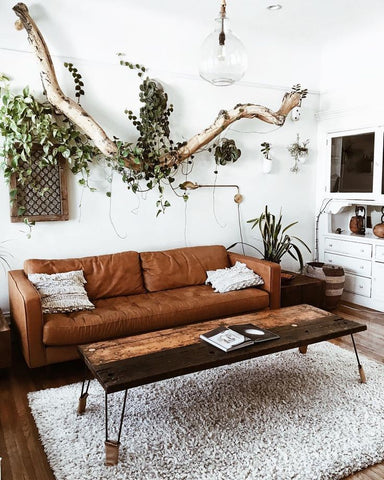 Houseplant Interiors