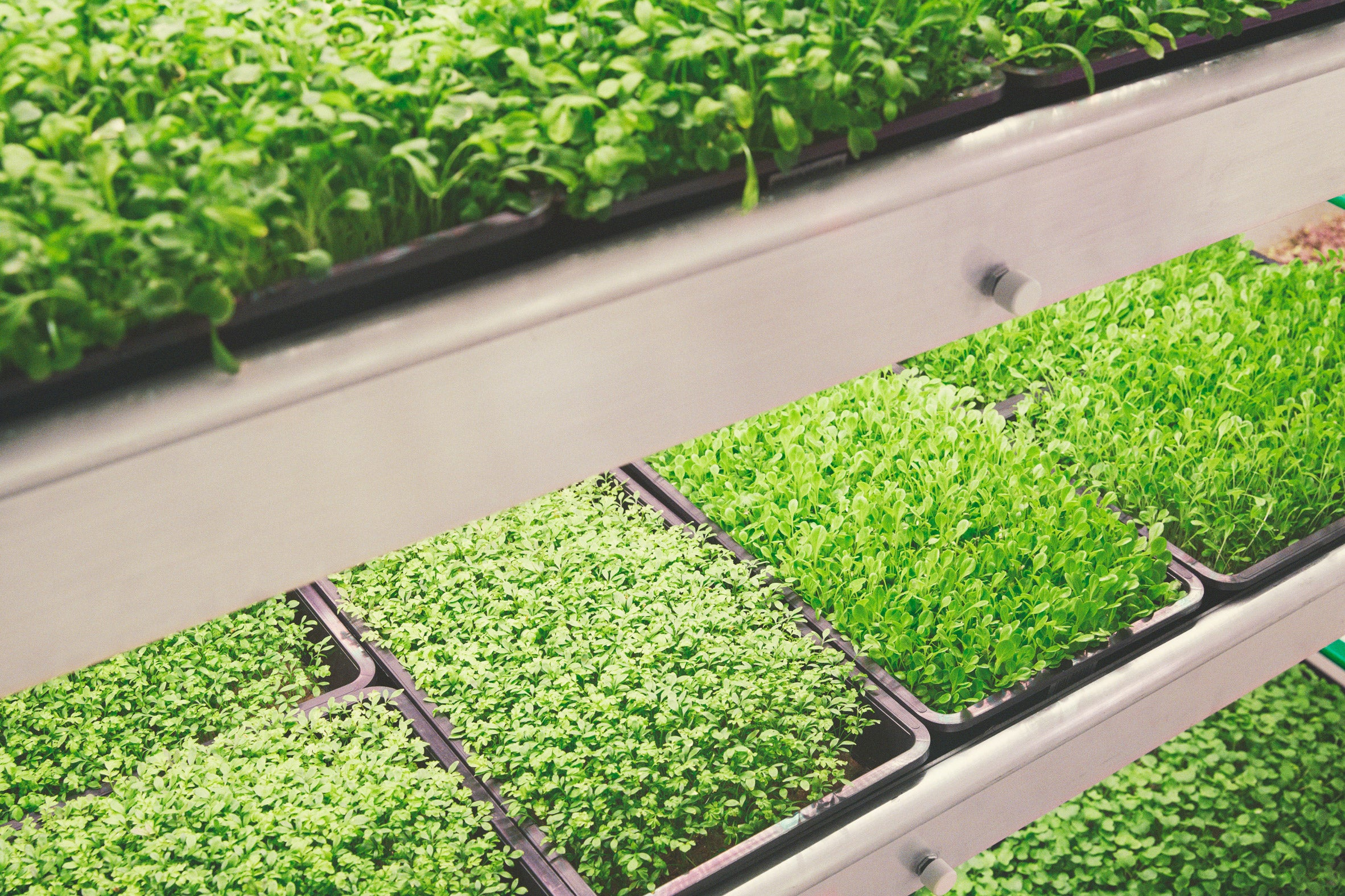 UK start-up aims to build over forty vertical farms (Image Credit - © 2021 FARMINGUK)