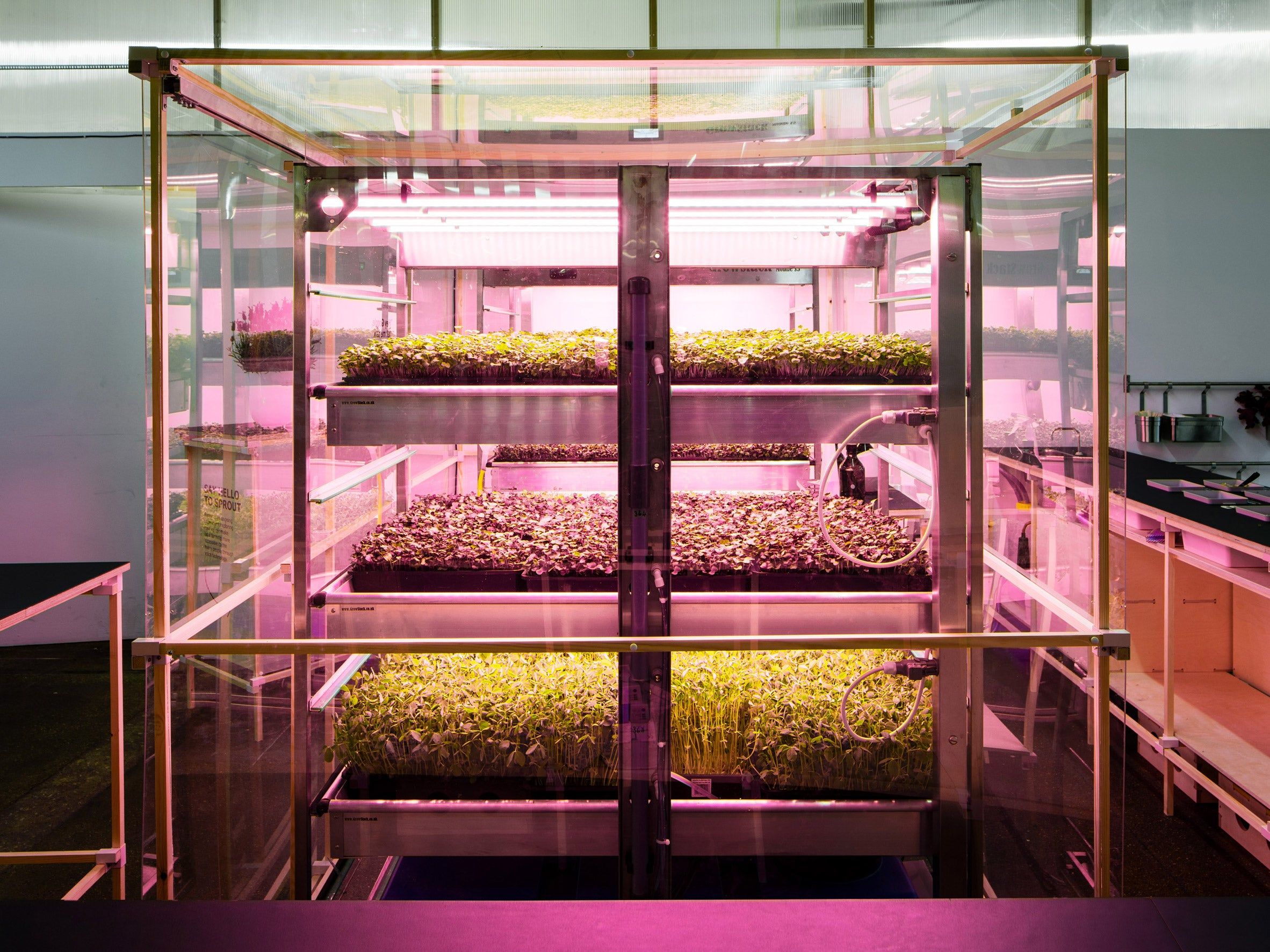 IKEA lab Space10 creates pop-up hydroponic farm for growing extra-healthy salads , (Image Credit - Rory Gardiner)