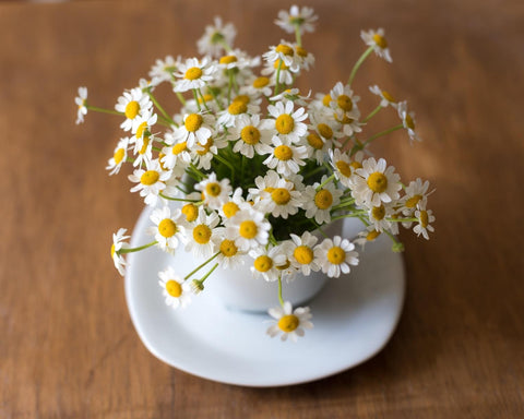 Cup with chamomile flowers coming out of it