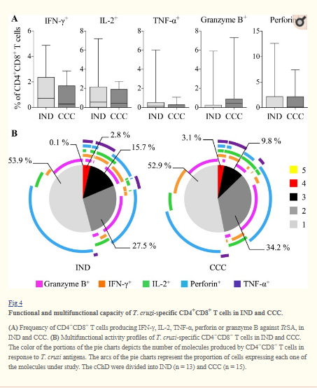 Impact of benznidazole treatment on the functional response of Trypanosoma cruzi antigen-specific CD4+CD8+ T cells in chronic Chagas disease patients