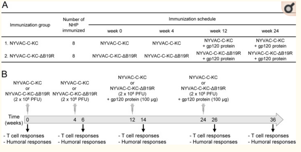 HIV/AIDS Vaccine Candidates Based on Replication-Competent Recombinant Poxvirus NYVAC-C-KC Expressing Trimeric gp140