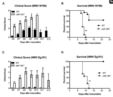 Cellular microRNA-155 Regulates Virus-Induced Inflammatory Response and Protects against Lethal West Nile Virus Infection
