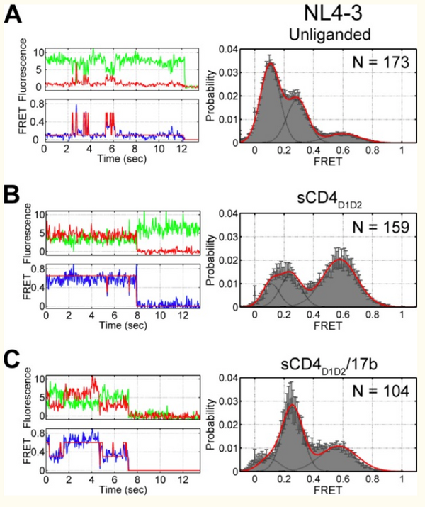 Structure and Dynamics of the Native HIV-1 Env Trimer