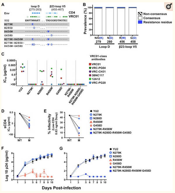 HIV-1 fitness cost associated with escape from the VRC01 class of CD4 binding site neutralizing antibodies.