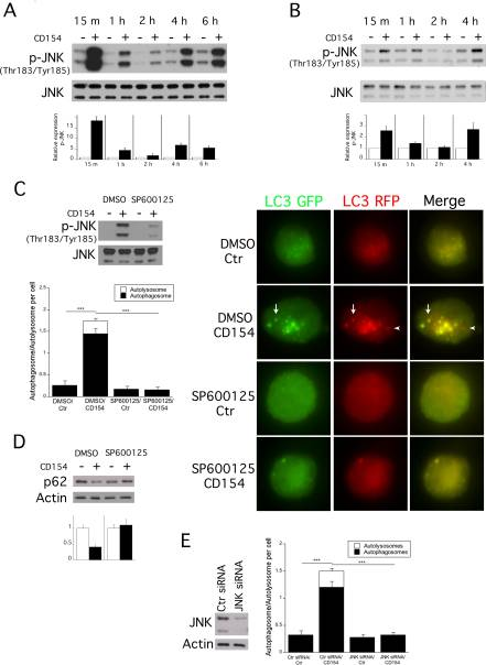 Identification of Signaling Pathways by Which CD40 Stimulates Autophagy and Antimicrobial Activity against Toxoplasma gondii in Macrophages