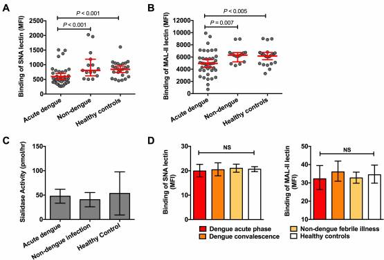 Desialylation of platelets induced by Von Willebrand Factor is a novel mechanism of platelet clearance in dengue