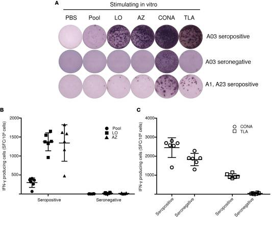 Adjuvanted multi-epitope vaccines protect HLA-A*11:01 transgenic mice against Toxoplasma gondii