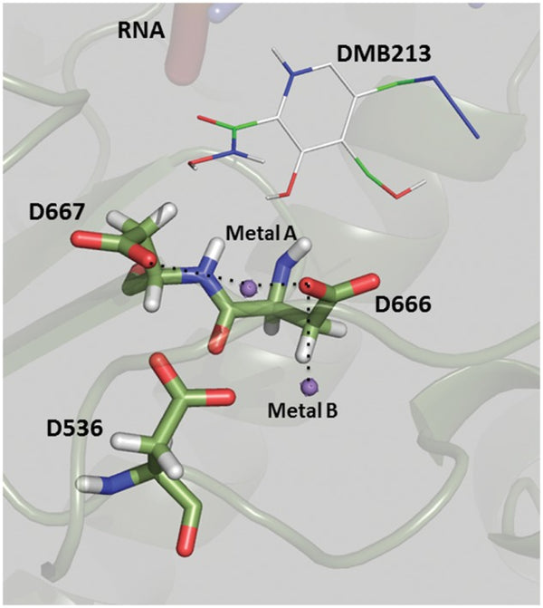 Purification of Zika virus RNA-dependent RNA polymerase and its use to identify small-molecule Zika inhibitors