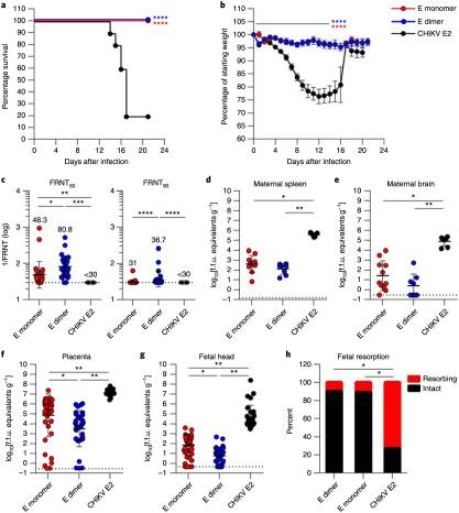 A protective Zika virus E-dimer-based subunit vaccine engineered to abrogate antibody-dependent enhancement of dengue infection