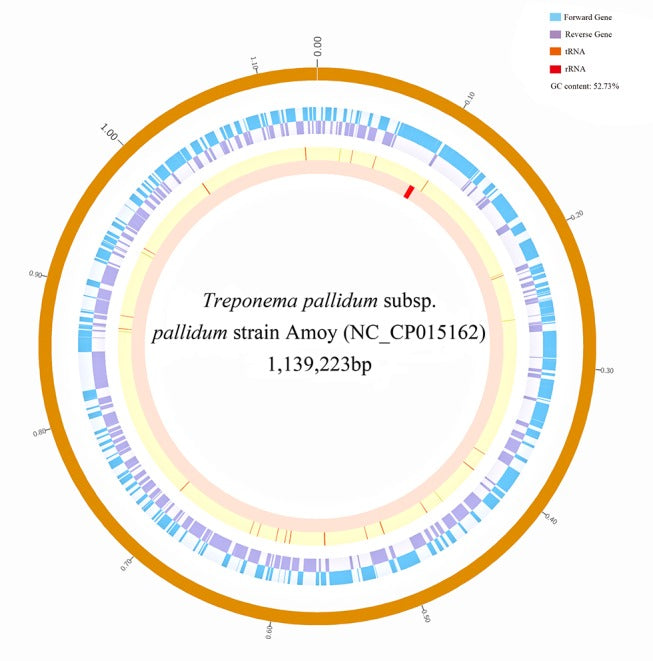 Whole genome sequence of the Treponema pallidum subsp. pallidum strain Amoy: An Asian isolate highly similar to SS14