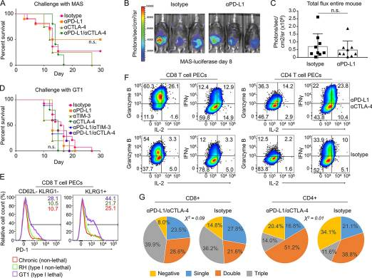 PD-L1, TIM-3, and CTLA-4 Blockade Fails To Promote Resistance to Secondary Infection with Virulent Strains of Toxoplasma gondii