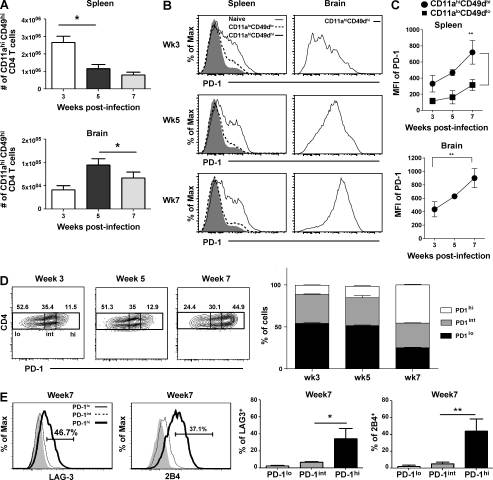 Blimp-1–mediated CD4 T cell exhaustion causes CD8 T cell dysfunction during chronic toxoplasmosis