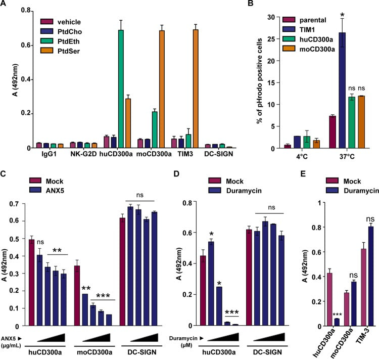 The Phosphatidylserine and Phosphatidylethanolamine Receptor CD300a Binds Dengue Virus and Enhances Infection