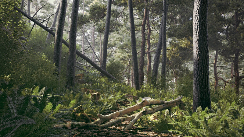 Forest Bundle vol. 1 (Evermotion 3D Models) - Architectural Visualizations