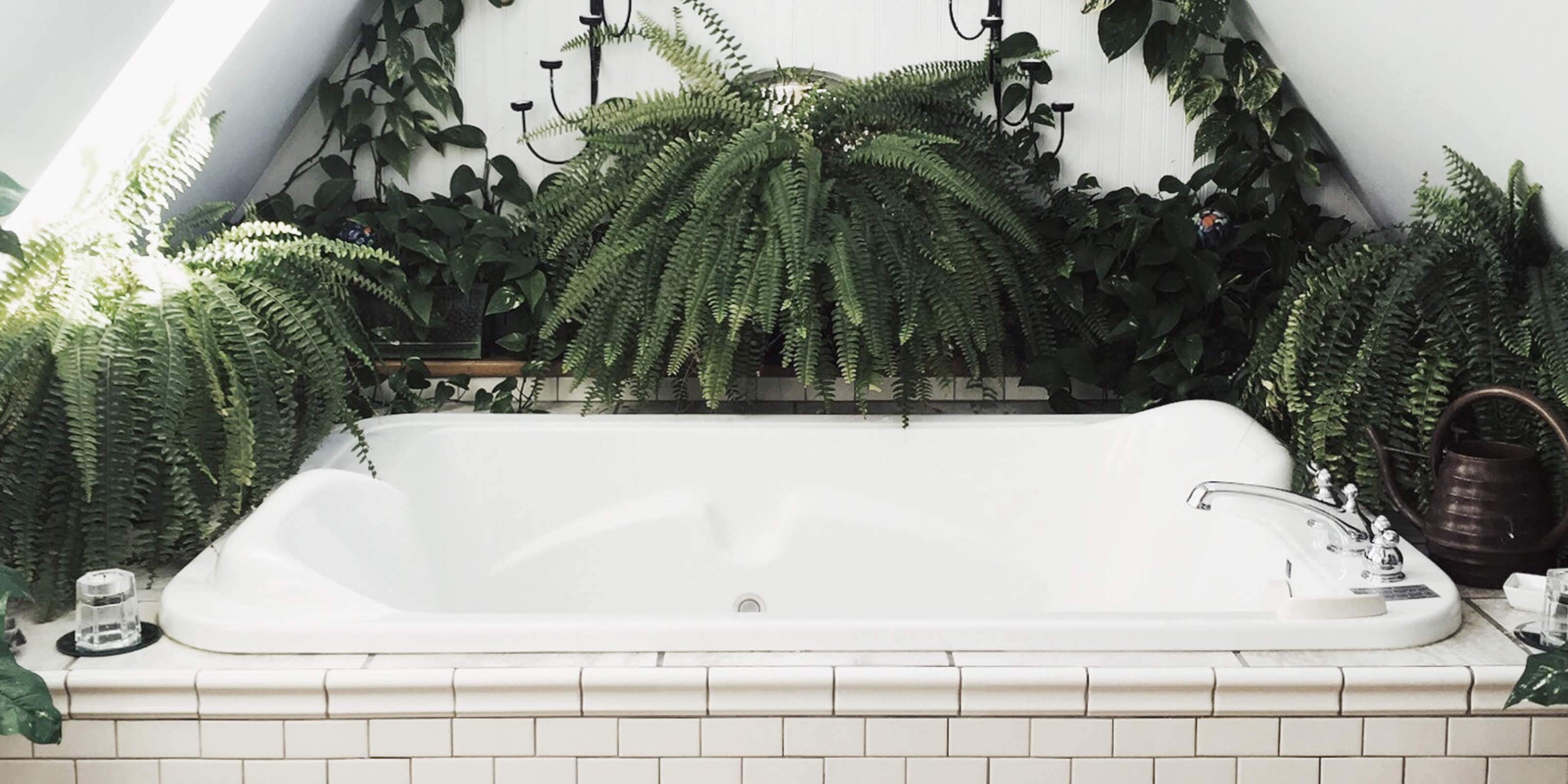 The 8 best plants for your bathroom