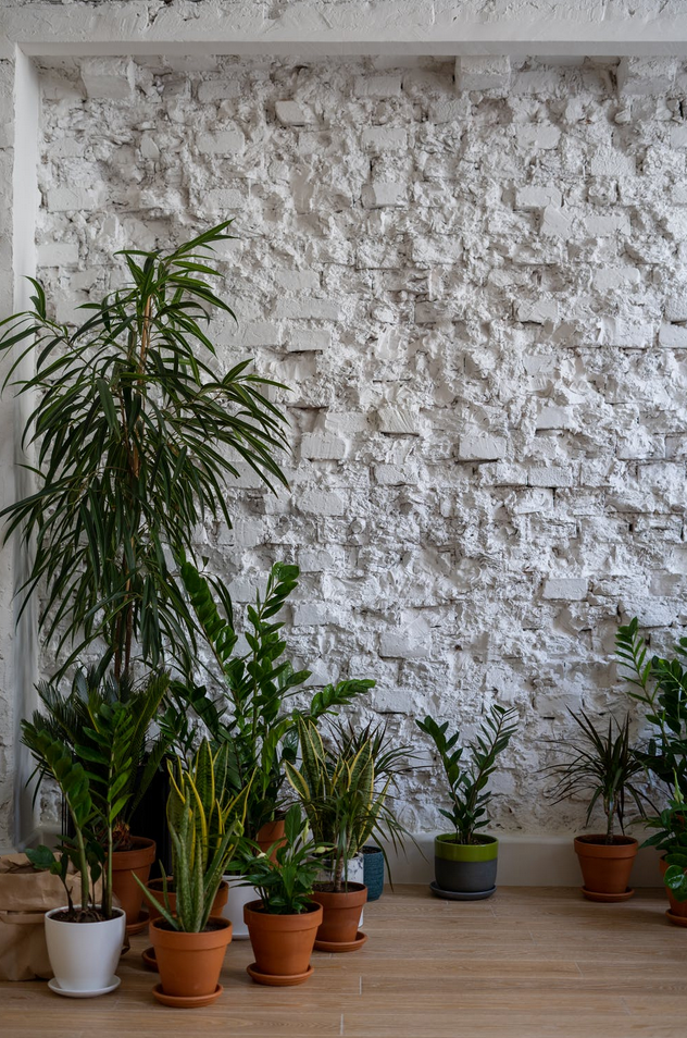 Our top 5 low light houseplants