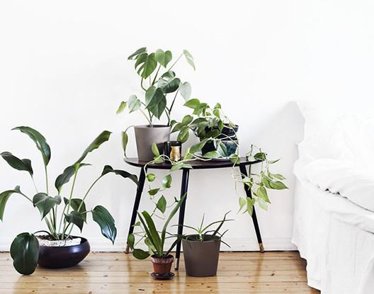 Getting your houseplants ready for spring!