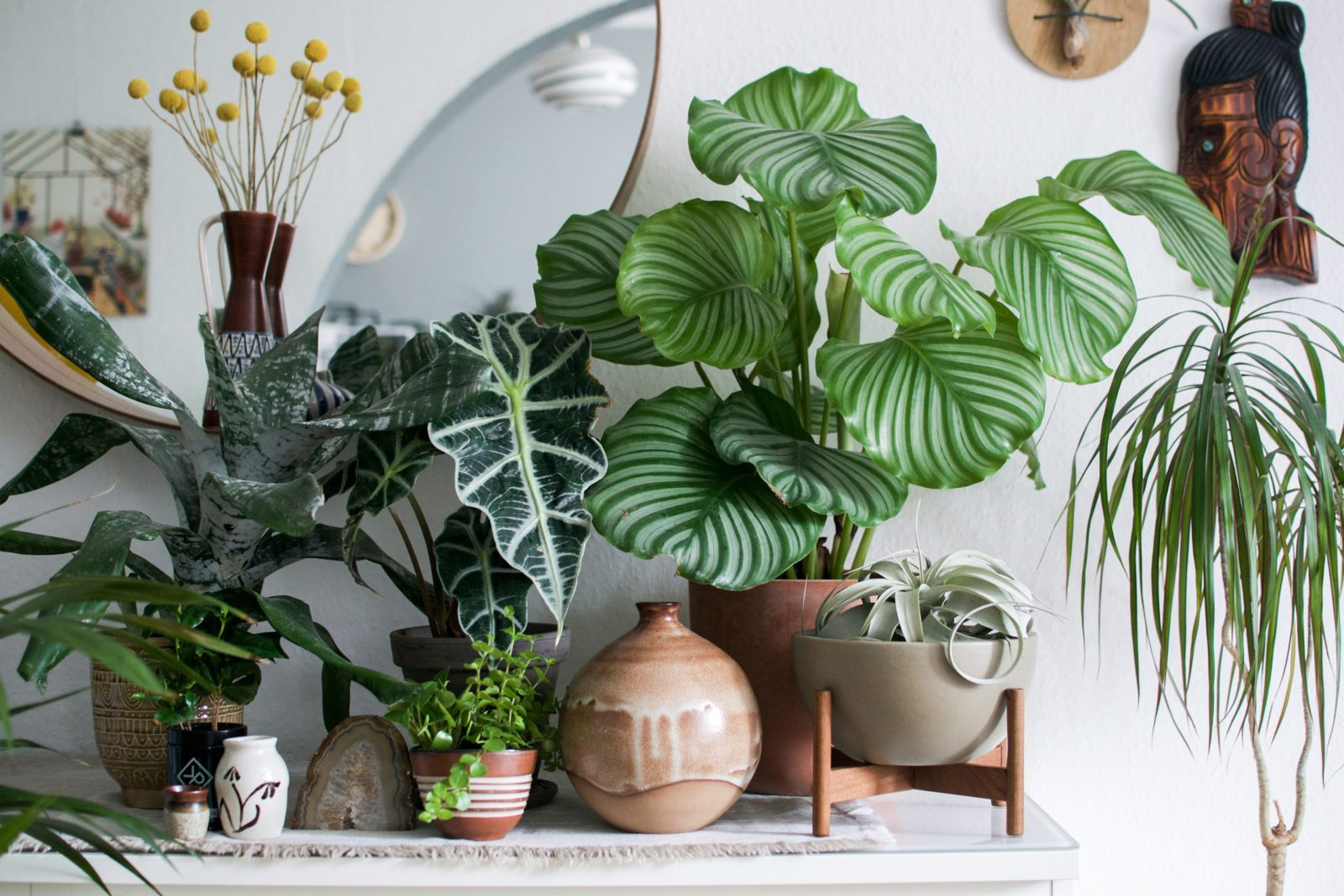 A plant for every room!