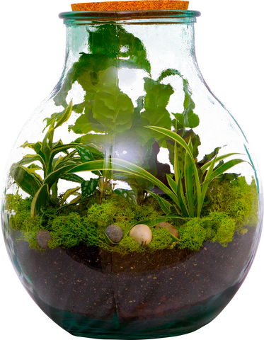 Completed DIY Terrarium kit - available for delivery in BC and Alberta