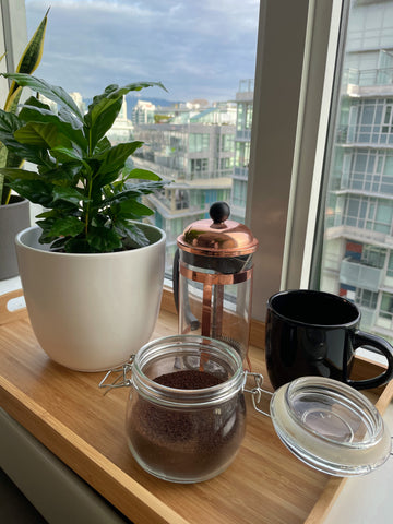 Gino - Coffee plant delivered to your doorstep in Canada