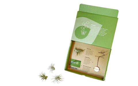 Gift Box includes - air plant, air plant throne and gift card.